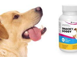 SnackyDoggy - prix, composition, action, commentaires sur le forum. Collations santé pour votre animal de compagnie!
